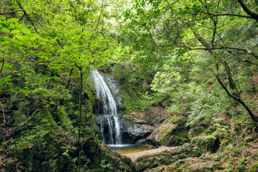八曽滝 もみの木キャンプ場